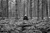 In the pines (martinfowlie) Tags: wood trees england blackandwhite man forest canon suffolk hoodie nirvana pines 7d bracken ferns loner wheredidyousleeplastnight lmort