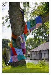 Keeping warm (Ankie Rusticus, I'm not much here) Tags: haven colour tree boom breien sneek domp wildbreien