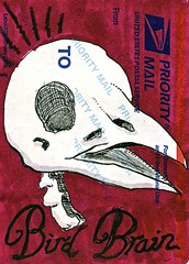 Bird Brain (Wires In The Walls) Tags: skull sticker avian 2012 birdbrain label228 wiresinthewalls