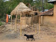 santiniketan (mahemot) Tags: india village para santiniketan sauntal