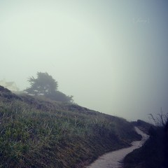 Fog along the coastal path (Electra_star) Tags: trees sea house mist grass fog coast cornwall path coastal polzeath janeybraniganaugustportfolio