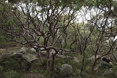 Nature Scrawl
