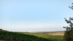 Weites Land #Rheinhessen