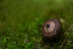 about an acorn (Nina ZM) Tags: ifttt wordpress