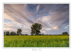 same place another moment. (Tom Baetens) Tags: 1835mm tombaetens belgium church clouds d610 landscape nikon outdoor rapeseed sky tree view yellow