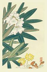 Rhododendron and white mountain-avens (Japanese Flower and Bird Art) Tags: flower rhododendron brachycarpum ericaceae white mountainavens dryas octopetala rosaceae masaharu inoue nihonga woodblock print japan japanese art readercollection