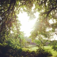 # # # # # # # # # # # #japan #tokyo #scenery #park #sunbeam #sunbeams #morning #morningsunshine #morningsun #tree #trees #leaves #green #sky #skies (tsukataiphoto) Tags: instagramapp square squareformat iphoneography uploaded:by=instagram rise