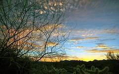 Twilight   #sunset #desert #colorful #nature #cloudscape #lastlight #explore #landscape #natgeo #arizonahighways #azcentral #arizona #nikonphotography (Eddy Dinero) Tags: azcentral landscape nature colorful nikonphotography desert cloudscape natgeo lastlight explore arizona sunset arizonahighways