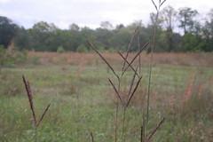 IMG_2915 (Annie Aguirre) Tags: ecp elkhart county parks park benton spillway nature birding birders people walk walks fall