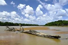 Explore (Mara Hermes) Tags: acar rio river amazon amaznia par brasil