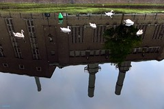 Swan Factory (Eddy Allart) Tags: cisnes zwanen reflection reflejos fabrica holandes swans water