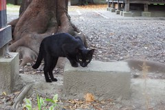 Today's Cat@2016-09-06 (masatsu) Tags: cat thebiggestgroupwithonlycats catspotting pentax mx1