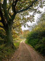 Into Ramsdale (matrobinsonphoto) Tags: north york moors yorkshire ramsdale beck track path winding road leading lead line tree autumn autumnal trunk leaves leaf hedge nature natural landscape outdoors calm serene october whitby beauty branches countryside uk great britain british scenery