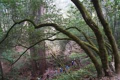 Mount Tamalpais: Rock Spring to Stinson Beach Hike (27) (Planet Q) Tags: mttam marinheadlands
