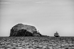 North Berwick - Bass Rock - 05.jpg (ibriphotos) Tags: blackandwhite northberwick gannet beach bass eastlothian seabird break friends polariser riverforth polarizer firthofforth daytrip weekend caravan