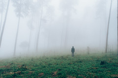 Hope is a dangerous path (_Moliveira) Tags: fog woods nature fine art landscape foggy misty green forest tree