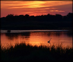 Serene End of Day (dianealdrich - Please read my updated profile) Tags: gold goldensunset goldensky goldenglow glow shimmer sunset summertime latesummer egret silhouette beautiful beautifulscene serenescene serene peaceful peacefulscene nature landscape warm