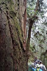 Mount Tamalpais: Rock Spring to Stinson Beach Hike (39) (Planet Q) Tags: mttam marinheadlands