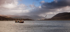 Loch Broom (Joe Dunckley) Tags: uk sea mountains landscape boats scotland highlands atlanticocean ullapool westerross lochbroom rosshire