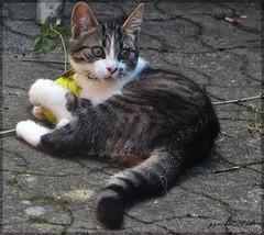 It Is my ball (gos1959) Tags: cat ball jammerbugt bestofcats mygearandme mygearandmepremium pregamewinner biersted rememberthatmomentlevel1 rememberthatmomentlevel2