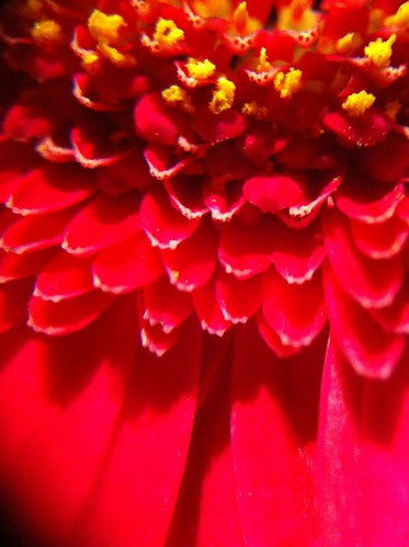 #37 Gerbera Abstract