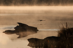 Disturbed in Paradise (Ian@NZFlickr) Tags: mist lake bird misty pond bravo dam central alexandra nz otago butchers