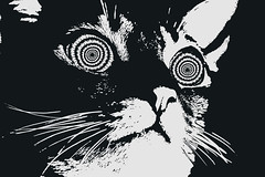 crazybitch (Odditie) Tags: trip summer cute cat fun outside crazy furry warm cottage moth fluffy drugs trippy