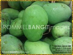 Green Mango IMG01001-20101127-1727 (Golden Eggs) Tags: photojournalism greenmango rightsmanaged melphoto rommelbangit daddypro rommelbangitimages