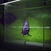 ! (shimobros) Tags: fish green film silhouette japan aquarium fuji bronica squareformat tokyotower sq basic piranha 150m zenza adobelightroom pn400