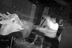 Hell's Angles by Franois Carl Duguay (Franois Carl Duguay) Tags: show music white black film metal photography death montreal live hard angles carl franois grind core hells pelecanus duguay labsynthe