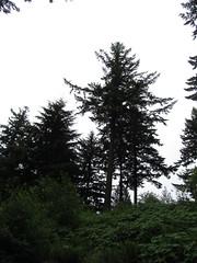 Hoyt Arboretum - Portland, Oregon (Dougtone) Tag