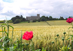 Looking Towards Glemsford Church [Explored] (Nicola Riley) Tags: uk flowers church barley rural landscape countryside suffolk fuji view farm farmland explore crop poppy poppies fujifilm x10 compactcamera barleyfield explored glemsford nicolariley fujix10 glemsfordchurch