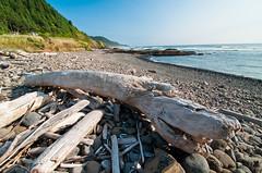Drift wood on the oregon coast (JSB PHOTOGRAPHS) Tags: wood oregon coast tokina f28 drift 1116mm dsc0180