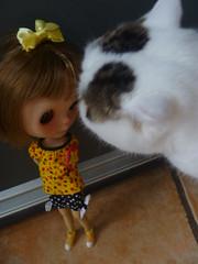 Even Felix Von Fishtails Loves her!!