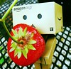 Num Num (ghostsecurity28) Tags: red summer brown green rain fun toy strawberry strawberries danbo danboard