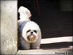 The Dangerous Hachi (RTaminato) Tags: dog sony cachorro sonydschx1