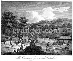 0077908 (Granger Historical Picture Archive) Tags: india field rural work garden early exterior farm cinnamon indian farming engraving crop plantation worker srilanka farmer dailylife srilankan 1804