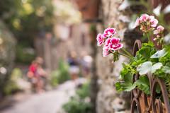 30/52 Verano - Los geranios de mi abuelo (Nathalie Le Bris) Tags: fleur flor flower granium genario evol dof bokeh closeup summer t verano blur