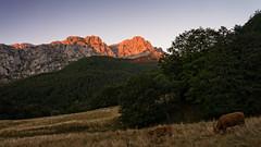 Desde Vegabao (Carpetovetn) Tags: paisaje landscape picosdeeuropa peaksofeurope cornin macizooccidental vegabao vacas atardecer anochecer sonynex5n len bosque hayedo espaa