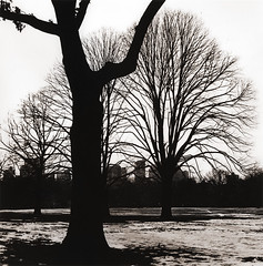 Winter's Grip (micalngelo) Tags: moerschlith rolleiflex trixfilm lith trix alternativephotography