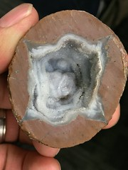 IMG_0473_Half of the first geode I ever bought (sdttds) Tags: rock geode crystal druzy quartz beauty beautiful specimen sentimental 366in2016 257of366 pictureoftheday september132016