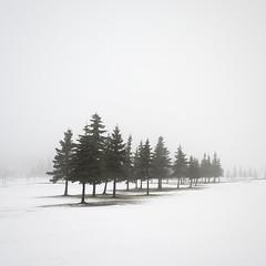 Troop II (Vesa Pihanurmi) Tags: spruce conifers trees winter snow nature minimalism espoo finland mist fog