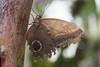 K46A7992 (Yvonne23021984) Tags: schmetterling butterfly hamm germany deutschland maxipark markro photography macrophotography canon canonphotography markofotografy canoneos7dmarkii insects insekten nature naturfotografie naturephotography closeup colorkey schmetterlinge butterflies