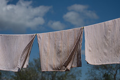 Blowing (Robin Penrose) Tags: 201608cc dish cloths towells line blowing wind blue sky