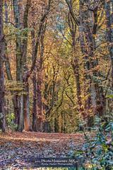Wald Spaetsommer (photomoments-mk) Tags: deutschland eggenstedt geografie natur sachsenanhalt wald geography germany nature saxonyanhalt wood