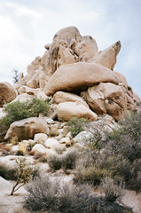 (36negatives) Tags: contaxt2 35mm analog film joshuatree desert california