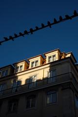 Sunset in Lisbon (Jose Viegas) Tags: lisbonstreets lisboa lisbon portugal sunset onthestreets urbanphotography urban lastlight fujixpro2 fujifilmxseries