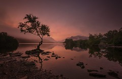 Alone in the universe (Captain Nikon) Tags: llynpadarn snowdonia lonetree moody mistywater misty mist dawn pastel atmospheric silhouette reflections nikond7000 sigma1020mm mountains llanberis lake snowdonianationalpark northwales wales
