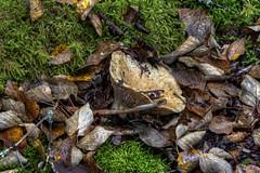 20160918_07 (tpeters2600) Tags: alaska autumn fall canon eos7d hdr photomatix tamronaf18270mmf3563diiivcldasphericalif mushroom mushroomanatomy
