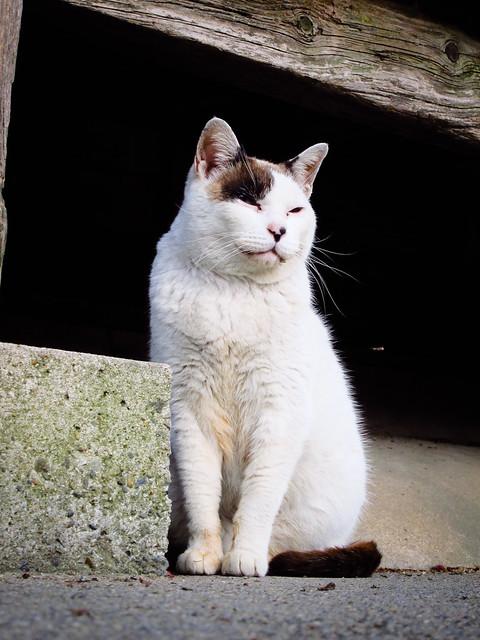 Today's Cat@2012-04-29